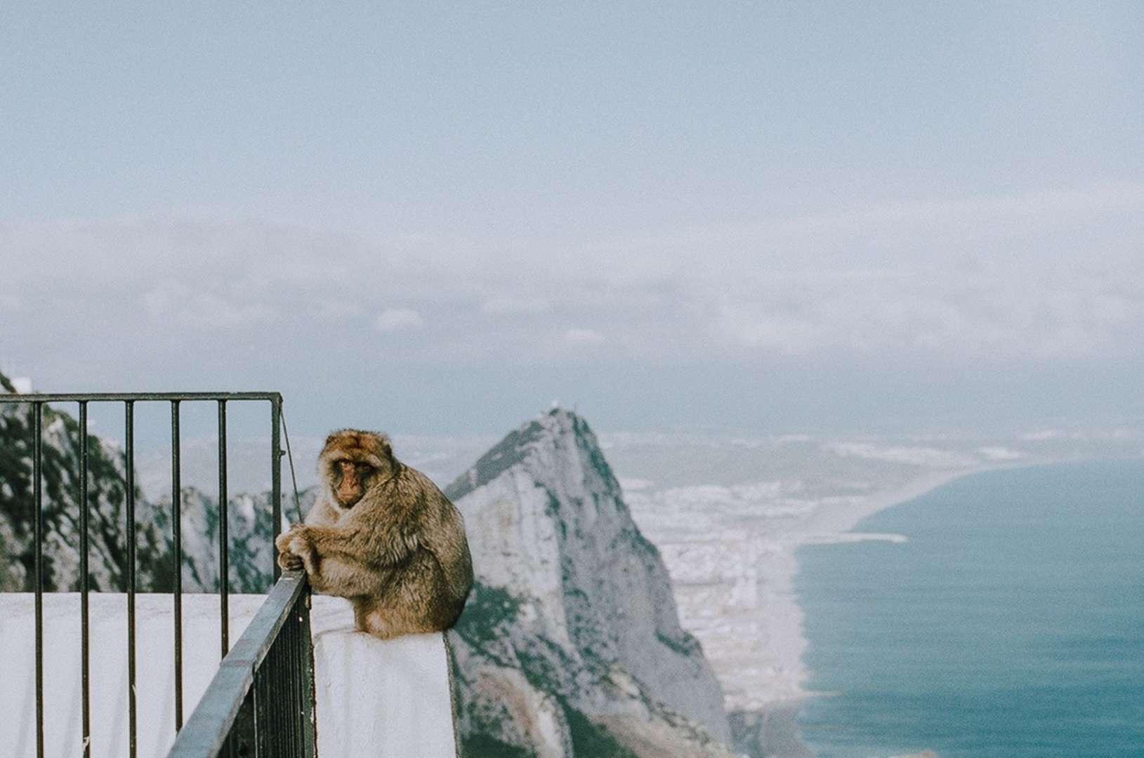 Reasons to Visit Gibraltar - The Monkeys