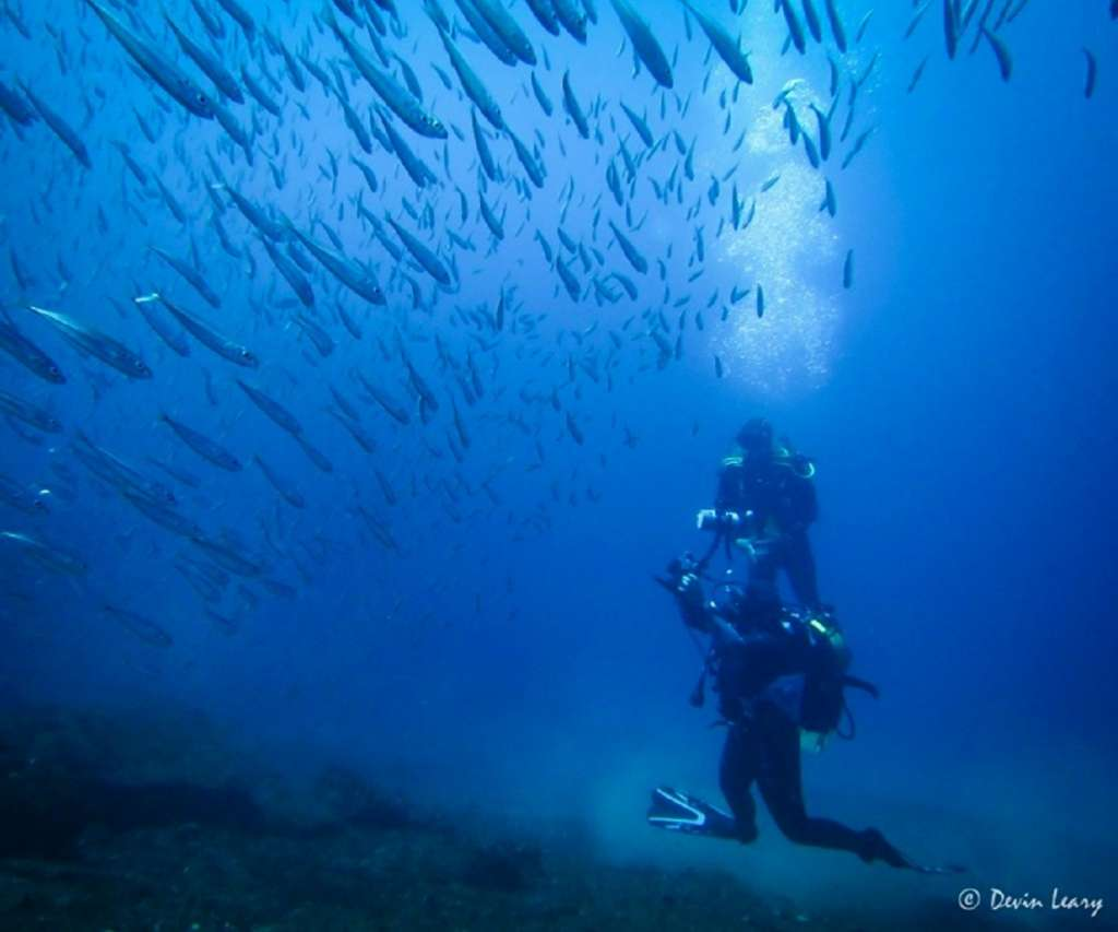 reasons-to-visit-the-azores-diving