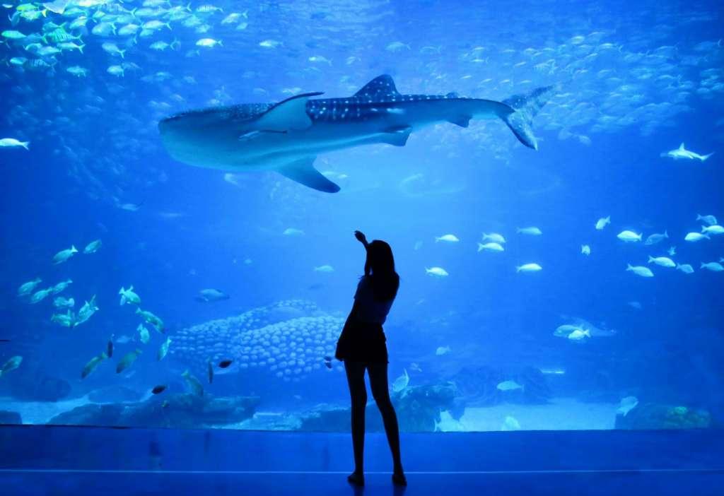 reasons-to-visit-dubai-fish