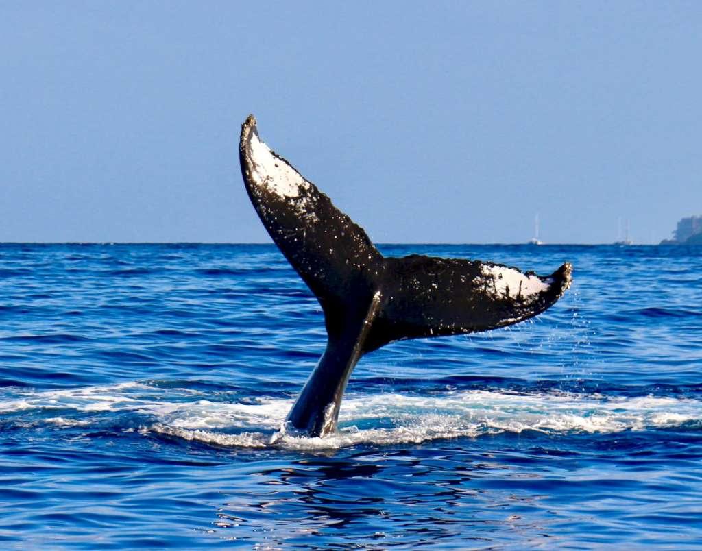 reasons-to-visit-rekjavik-whales