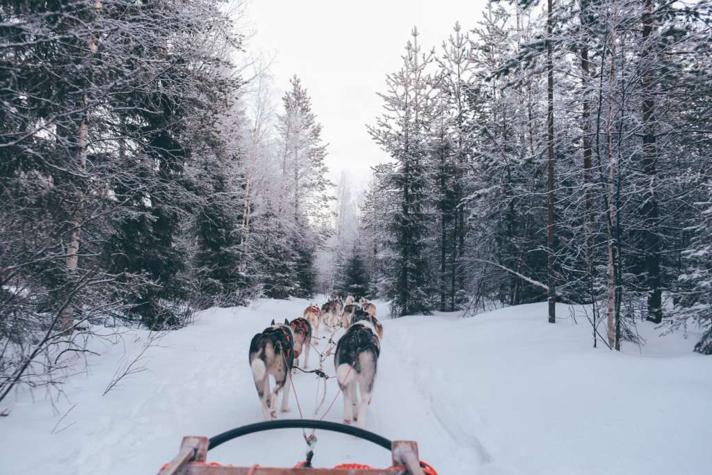 reasons-to-visit-finland-dogs