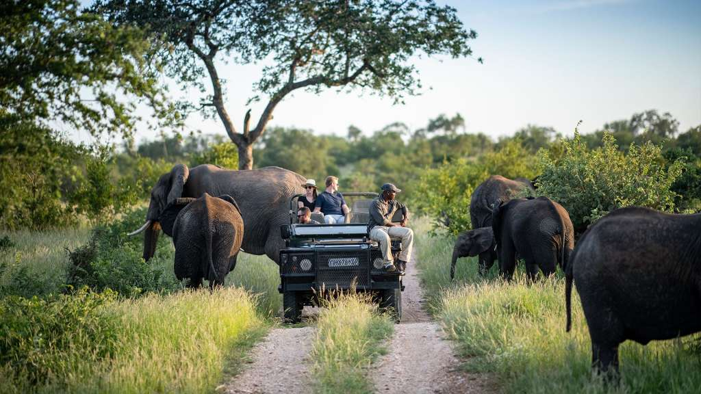 reasons-to-visit-south-africa-safari