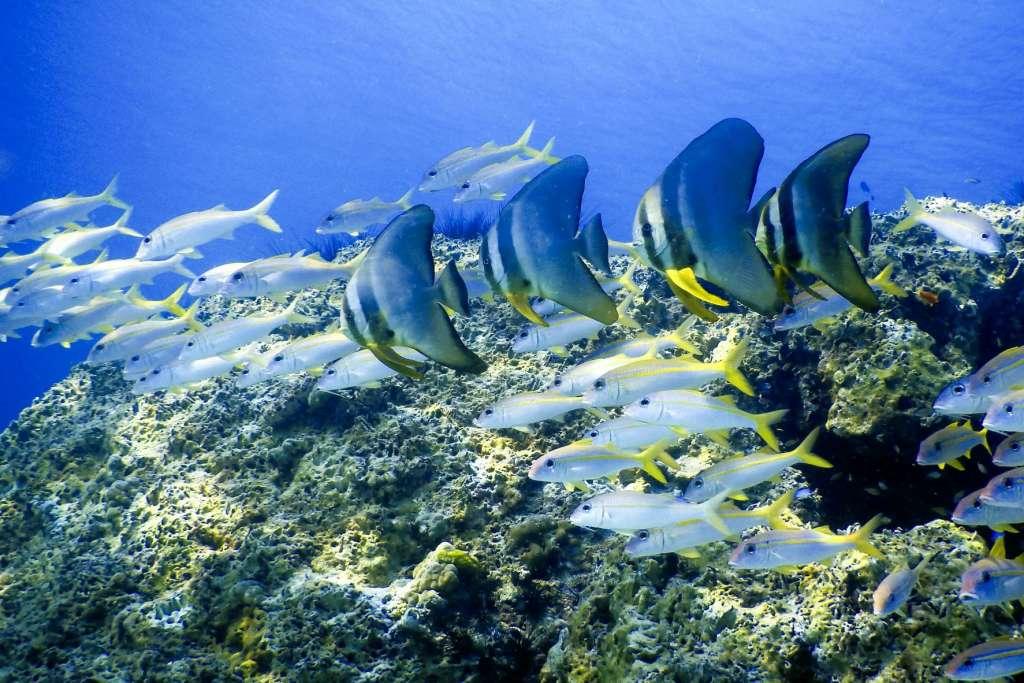 reasons-to-visit-thailand-divingt